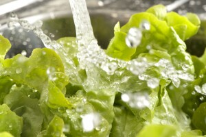 Close up of lettuce leaves being washed in the sink with splashing water