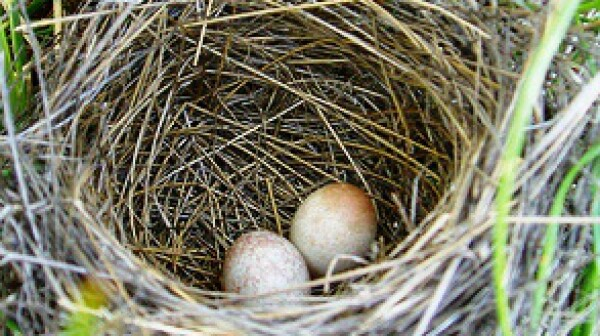 Nest Egg photo via Michael Cobb Allen