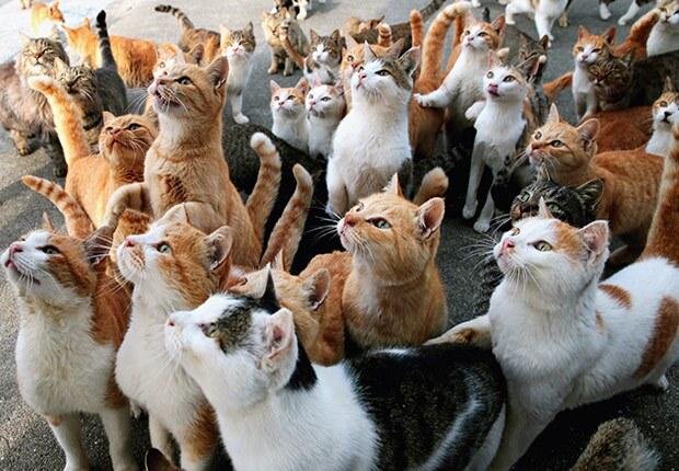 Aoshima Island Cats