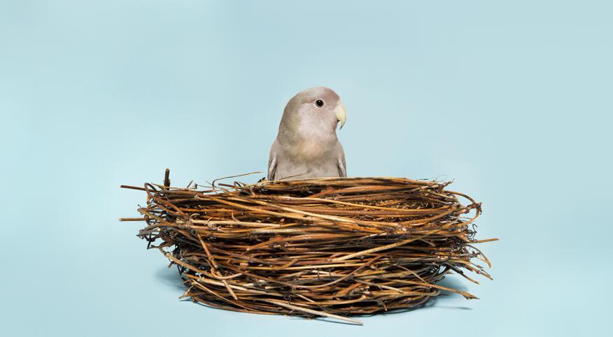 A single grey bird alone sitting in a nest, on a light blue background