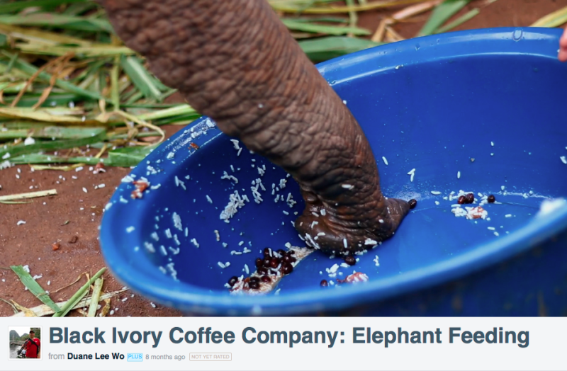 Elephant Eating Coffee