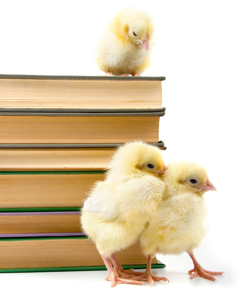 chicks-books