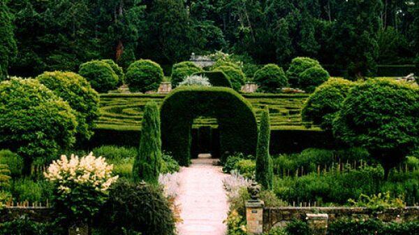 Boxwood Maze
