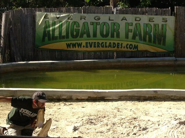 AlligatorFar,