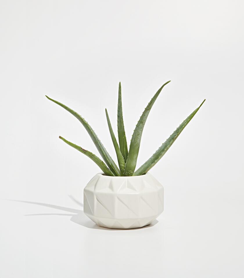 17122_AARP_Plants_&_Books_0373_Aloe.jpg
