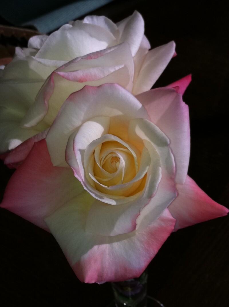 Rose for Al Blog