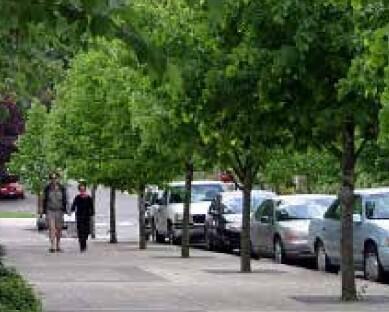 Two people walking along a tree-lined city street.