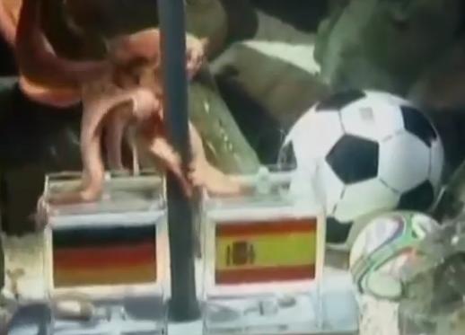 Octopus predicting World Cup