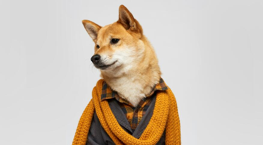 Portrait of a dog dressed in stylish human clothing