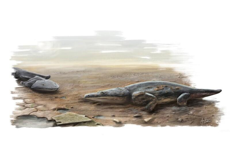 MetoposaurusArt(credit_Joana Bruno)