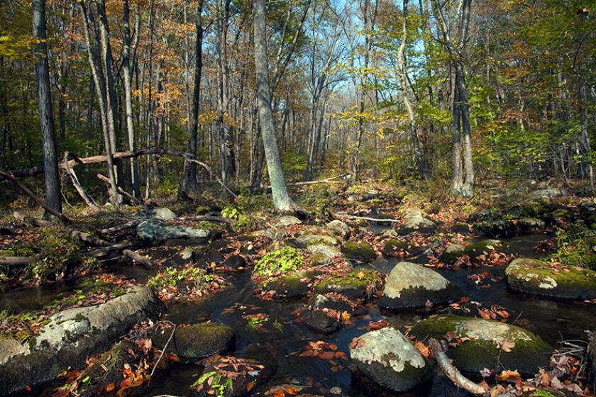 A boulder strewn scene in a swampy section of Clarence Fahnestock State Park in Putnam County, New York
