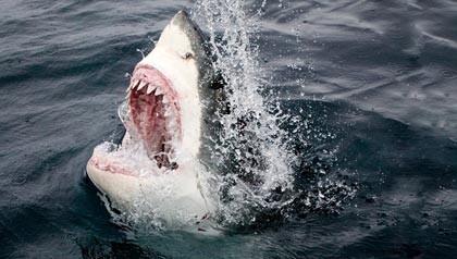 420-shark-week-25-years[1]