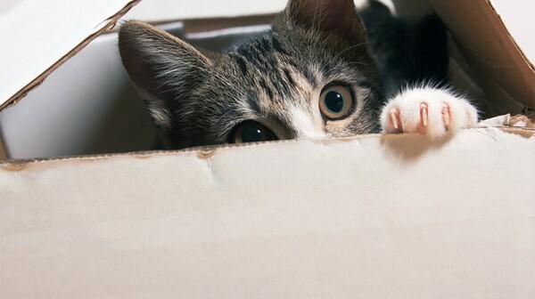 A cat peeking out of a box it is hiding in