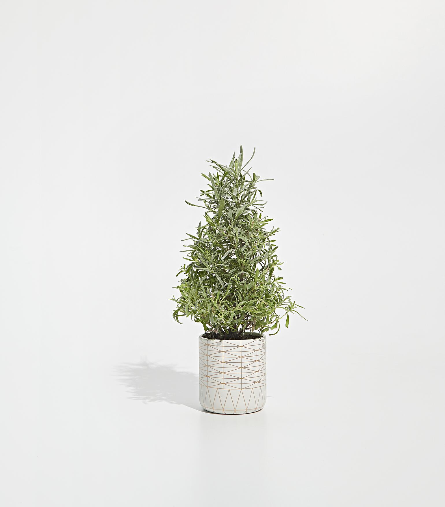 17122_AARP_Plants_&_Books_0375_Lavender.jpg