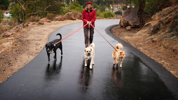 A woman walking three dogs on a rainy day