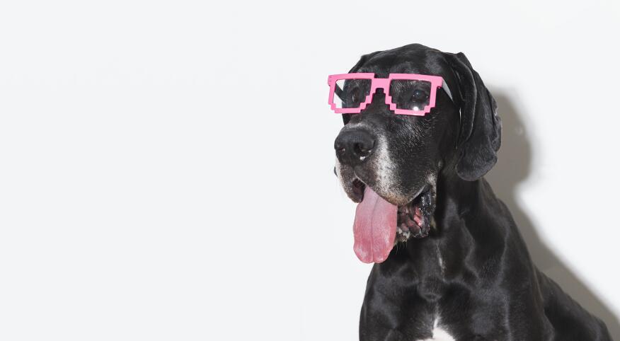 Cute Dog Wearing Funny Glasses