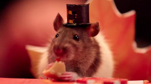 Tiny Hamster Enjoying Thanksgiving