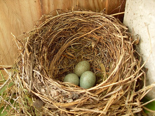 March nest egg blog photo
