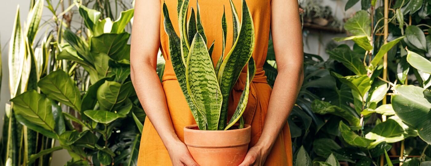 Midsection Of African American woman Holding Potted Plant Amid Plants