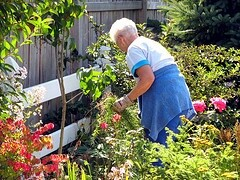 Mother-in Law working in the garden, Sept 2009