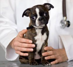 vet-and-puppy
