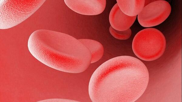 B0007649 Blood cells in a blood vessel