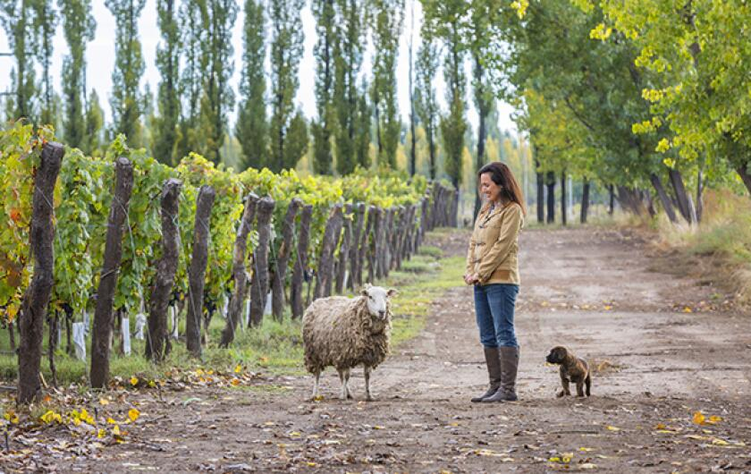 Laura Catena, owner, Bodega Catena Zapata, Adrianna Vineyard, Tupungato Alto, Uco Valley, Mendoza, Argentina