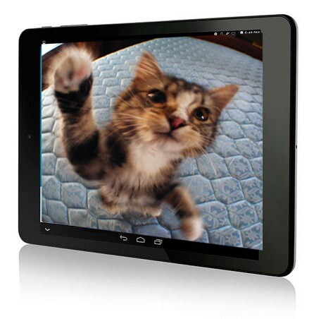 Cat in Video on Tablet