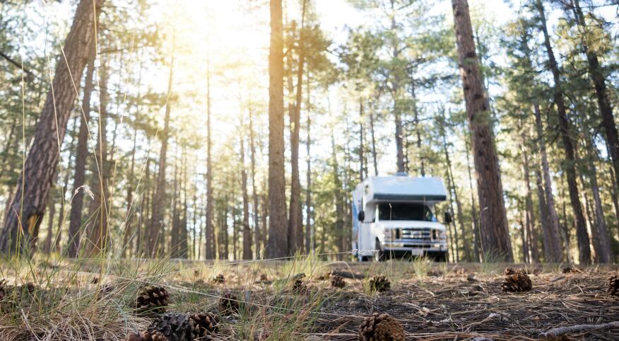 RV Park in the Wilderness Area with Pine Cones in the Foreground During Sunrise
