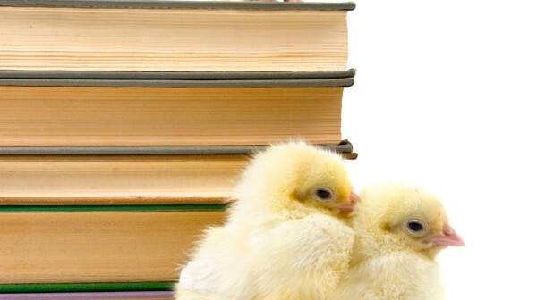 chicks-books