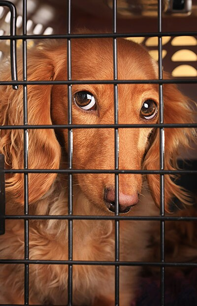 400-dog-cage