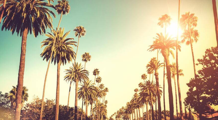 sunny day palm trees california road