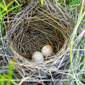 Nest Egg photo via Michael Cobb Allen