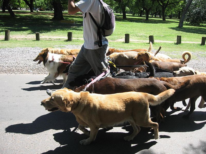 800px-Dog_walker_-_Buenos_Aires