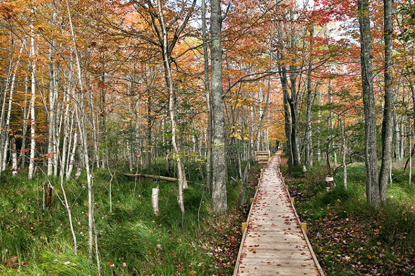 Jesup Trail Boardwalk at Sieur de Monts in Acadia National Park