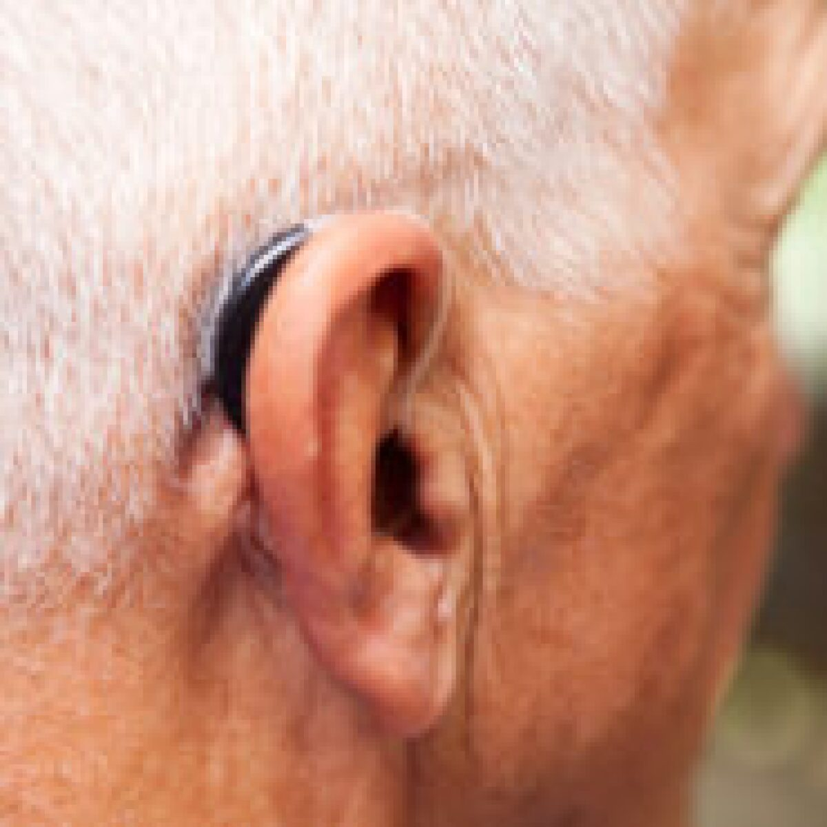 Hearing Aid Prices are Coming Down: Is Now the Time to