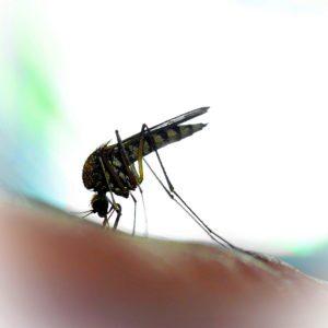 Mosquito biting victim
