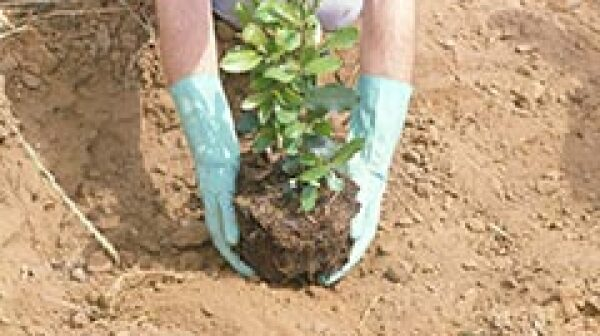 240-planting-tree-other-earth-friendly-days