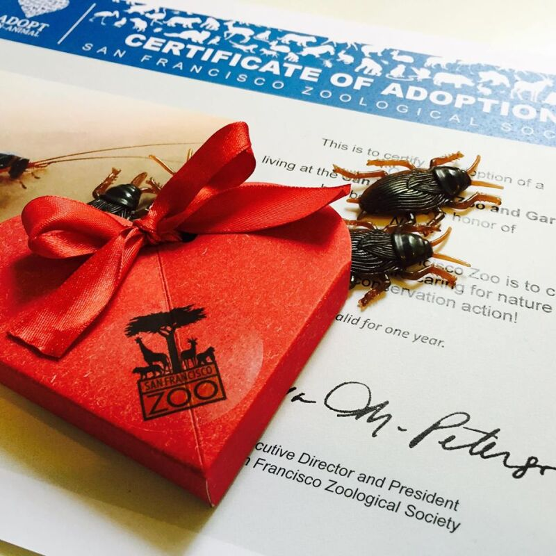 San Francisco Zoo Valentine with Cockroaches